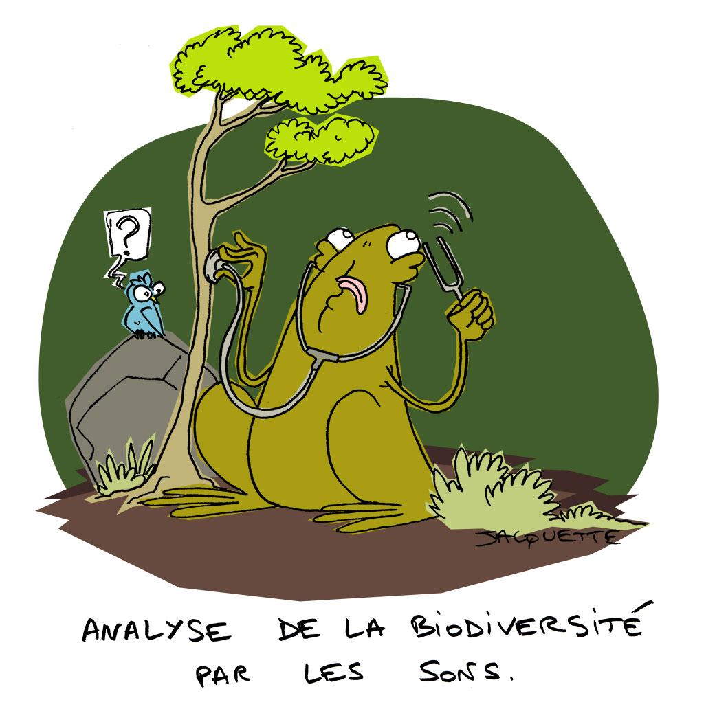 le crapaud _ nicolas Jacquette - analyser la biodiversité par les sons