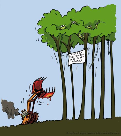 Le crapaud - Jérôme Liniger - Guerriers des forêts