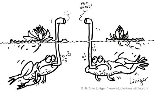 Le crapaud - Jérôme Liniger - Trop de réchauffement, pas assez de pluie