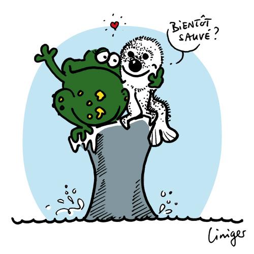 Le crapaud - Jérôme Liniger - Bébés phoques entre sauvetage et survie