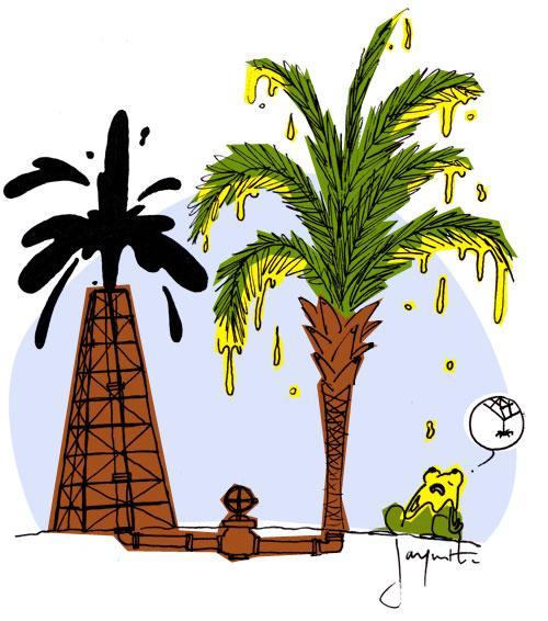 LE crapaud - Nicolas Jacquette - l'huile de palme le nouvel or noir