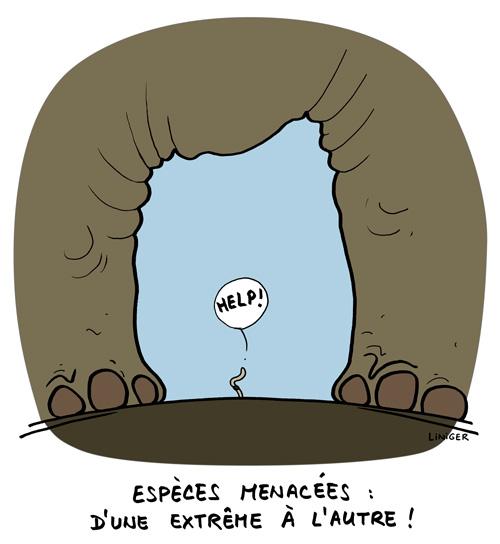 Le-Crapaud_ver-de-terre_en_danger_Liniger-Fiess