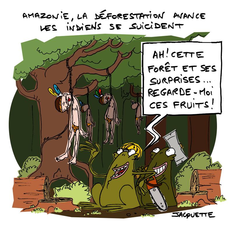 le crapaud - nicolas jacquette - robert fiess - amazonie déforestation et suicides des indiens