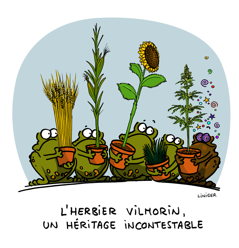 lecrapaud-fiess-liniger-herbier-vilmorin004