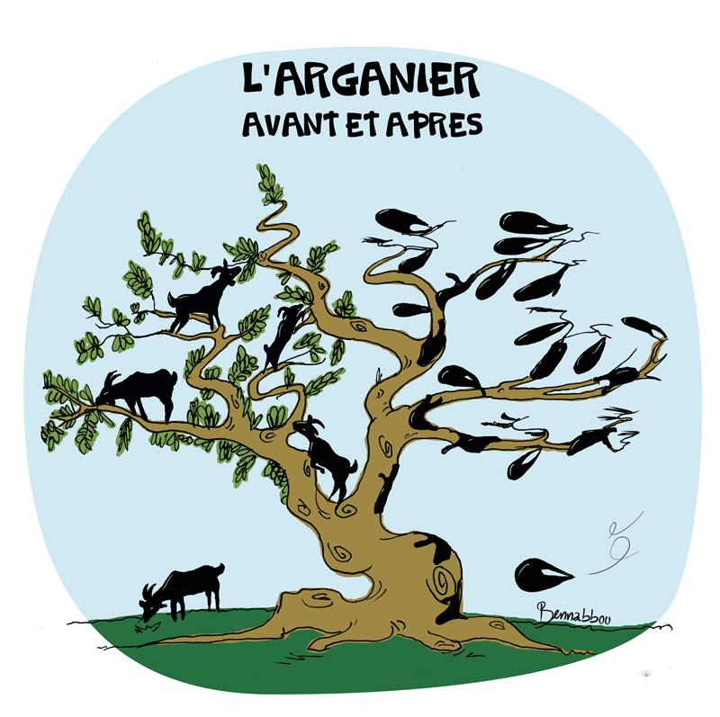 le crapaud - abdellah bennabbou - argane arganier souss-massa - agadir - maroc - coupes des arbres de la foret - cop22 - marrakech