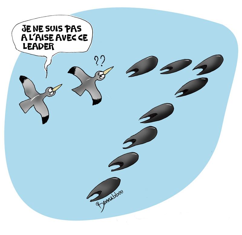le crapaud - robert fiess - abdellah bennabbou - la migration des oiseaux - sacs plastique - pollustion - maroc - cop22 - marrakech