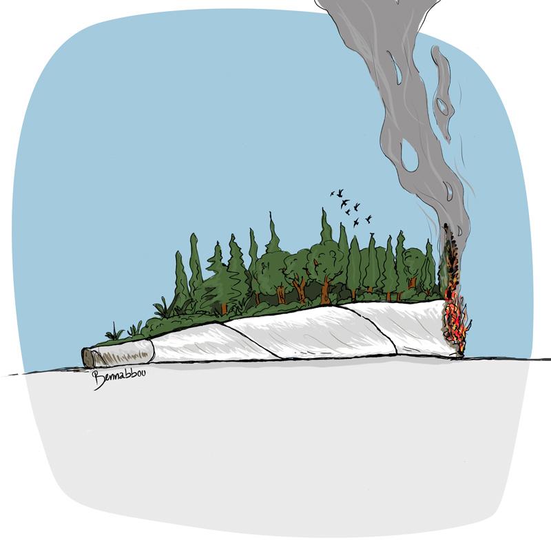 le crapaud - cop22 - bennabbou abdellah - cannabis hachich